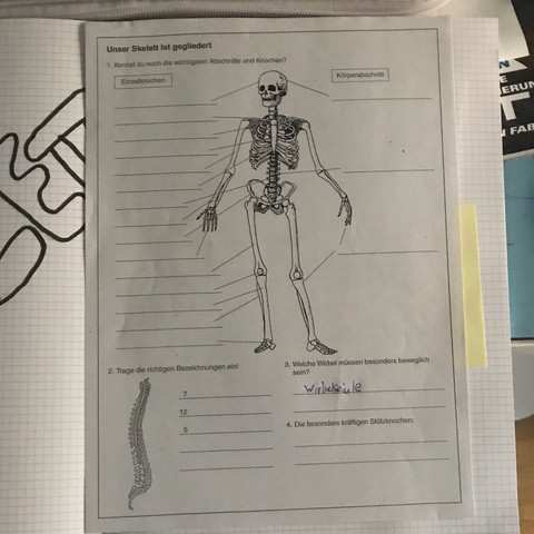 MenschlicherKörper Skelett - (Erklärung, Skelett, menschlicherkörper)