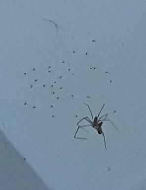 Könnten Das Kleine Spinnen Sein Tiere Nest