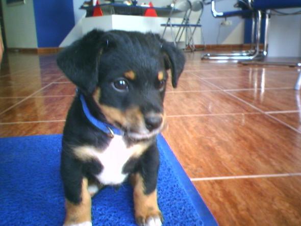 Hier is der Hund - (Hund, Hunderasse)