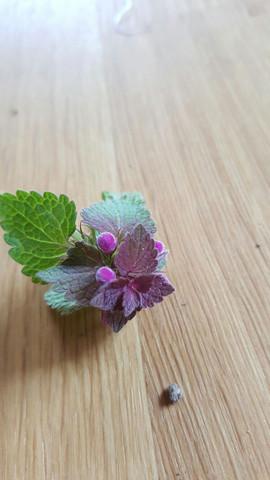 Pflanze 3 Blüte - (Pflanzen, Pflanzenbestimmen)
