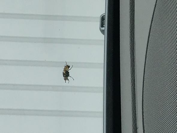 - (Tiere, Insekten)
