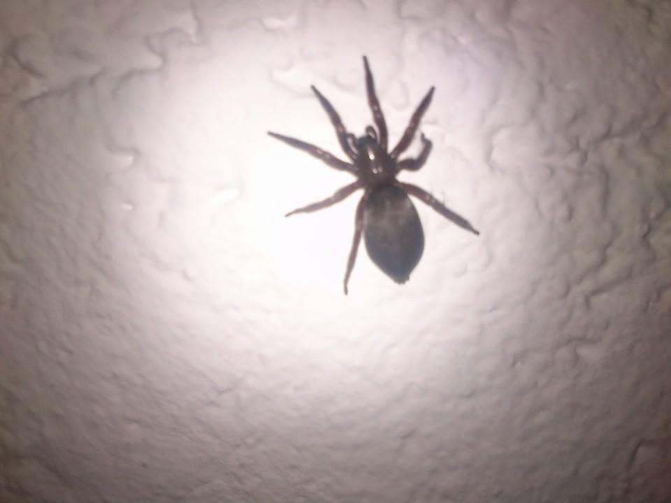 Wie Lange überleben Spinnen In Der Wohnung