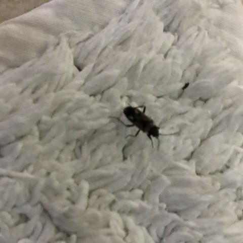 Komische Viecher Im Haus Tiere Insekten Schadlinge
