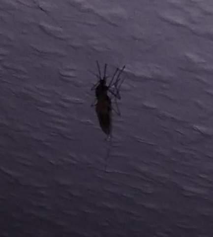 Komisches Insekt dss Sticht in Zimmer?
