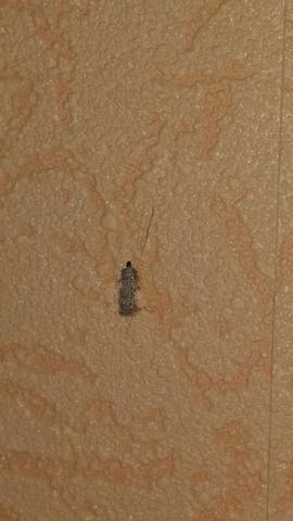 Insekt - (Tiere, Haushalt, Insekten)
