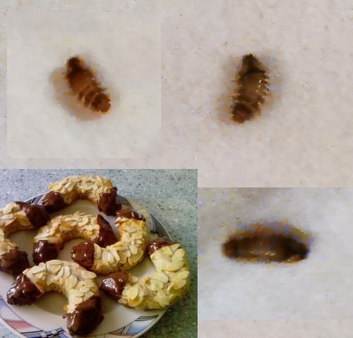 Insekt - (Insekten, Ungeziefer, Schädlinge)