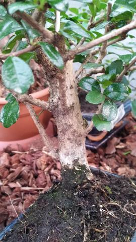 Bonsai Nr 2 - (Garten, Pflanzen, Natur)