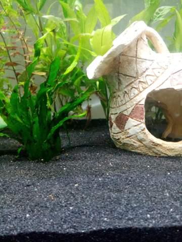 Kommische Gewächse an Aquarium Pflanze?