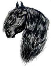 Hier das Bild :) - (Pferde, Bildbearbeitung, Bildbearbeitungsprogramm)