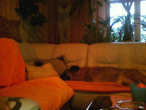 meine Hündin beim Gassi - (Hund, Kosten, Tierarzt)