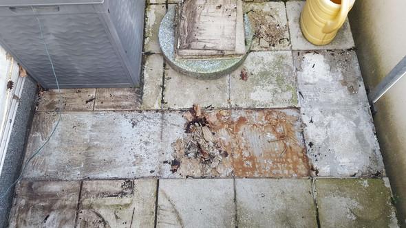 Kosten Fußboden Neu Fliesen ~ Kosten steinteppich auf balkon verlegen lassen heimwerken