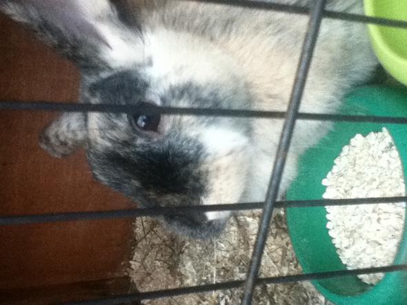 Kostet es was wenn ich mein Kaninchen beim Tierarzt durchchecken lasse?