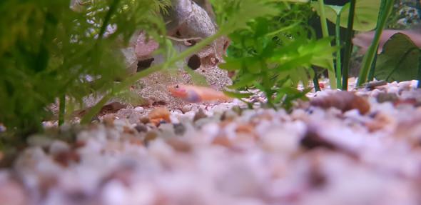 Krankheit Bei Mein Fisch Fische Aquarium Aquaristik