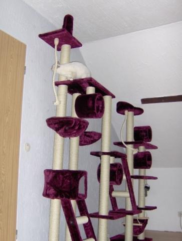 kratzbaum f r katzen selber bauen wer hat gute ideen tiere anleitung bau. Black Bedroom Furniture Sets. Home Design Ideas