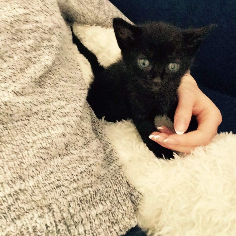 Wer kennt kreative Katzennamen für eine schwarze Katze