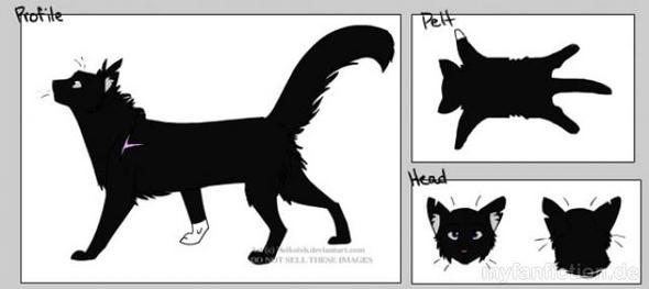 Rabe - (Buch, Katzen, Namen)