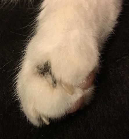 - (Katze, Hautkrankheit)