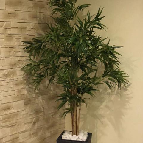 Künstliche Pflanzen in Wohnzimmer erzeugen starke Geruch bzw. Dünnes ...