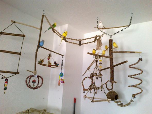 Meine selbst gewerkelte Vogelecke :) - (Pflanzen, Wellensittich, kanarienvogel)