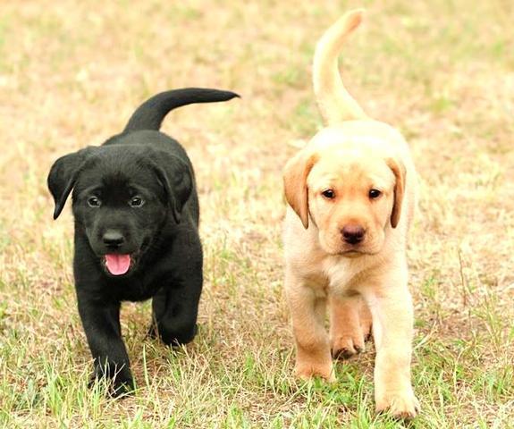 Diesen Hund:) - (Tiere, Hund, kaufen)