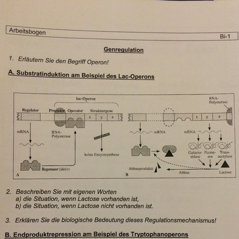 Abbildung  - (Biologie, Genetik, Bakterien)