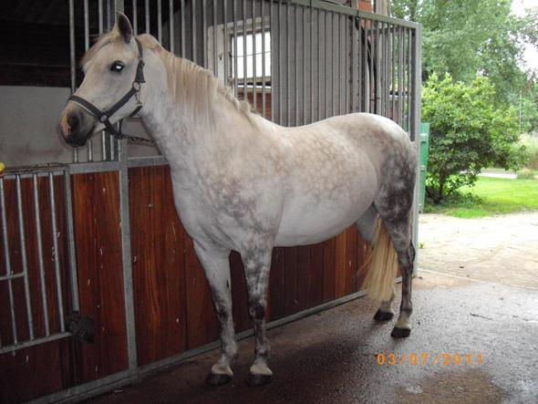 Länge der Bandagen für ein Pony
