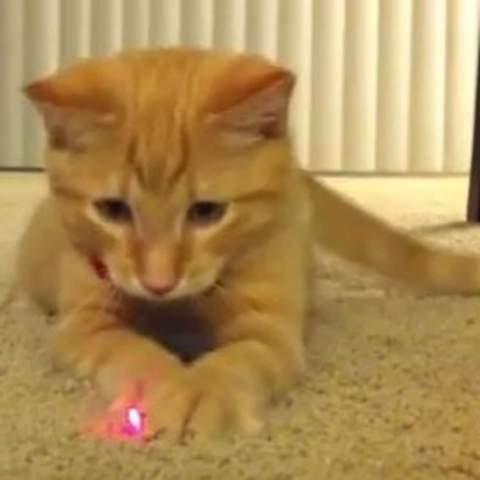 Laserpointer für Hunde?