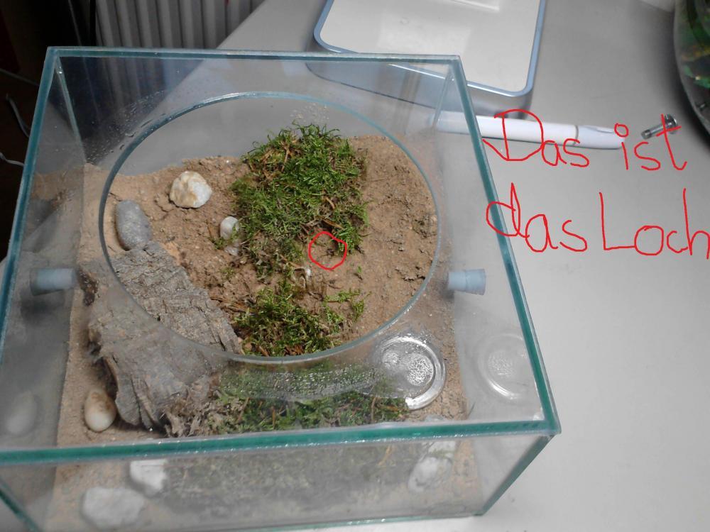 lasius niger ameisen winterruhe sry nochmal freizeit tierhaltung lasius niger. Black Bedroom Furniture Sets. Home Design Ideas