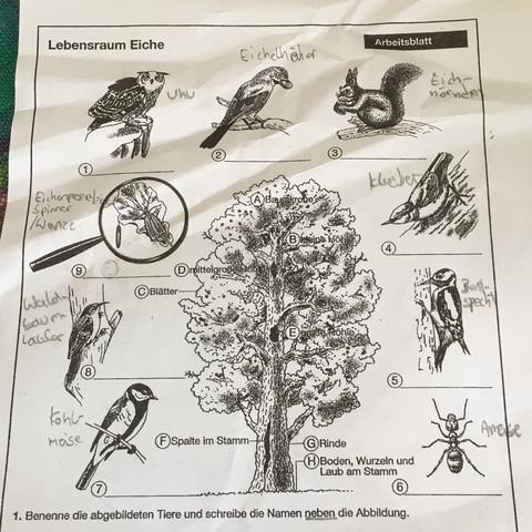 Lebensraum Eiche, Arbeitsblatt, 5. Klasse? (Schule)