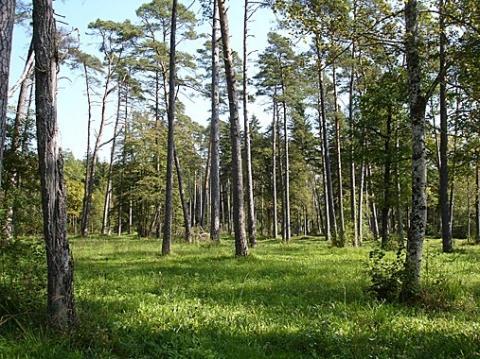 """Lichter Wald: Wann sind Wälder """"licht(ern)""""?"""