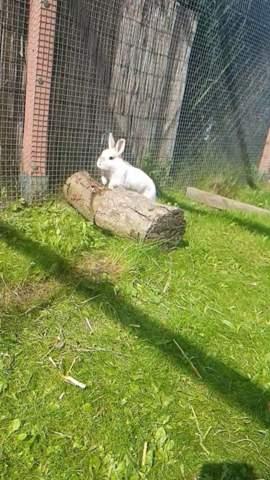 Lichterkette an Kaninchenstall?