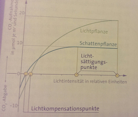Diagramm - (Biologie, Licht)