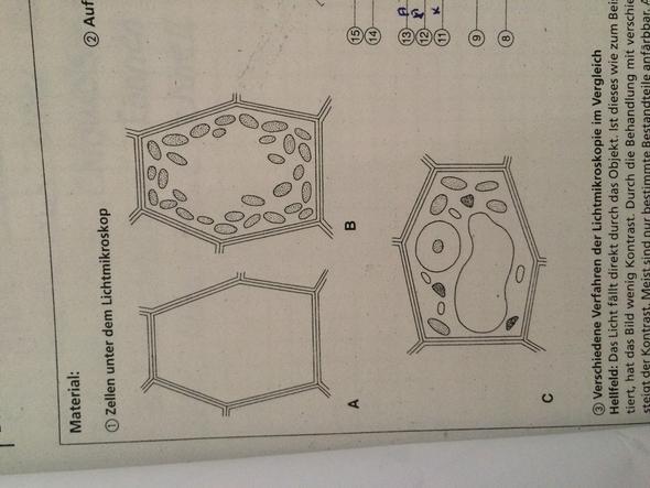 Pflanzenzellen - (Biologie, Pflanzen)