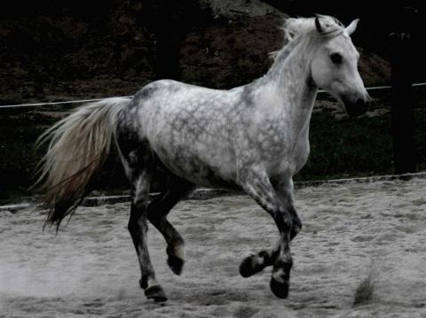 sieht aus wie meiner - (Pferde, reiten, Rasse)