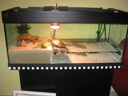 l st silikon sich im wasser aus oder gibt es wasserfeste aquarium landteil. Black Bedroom Furniture Sets. Home Design Ideas