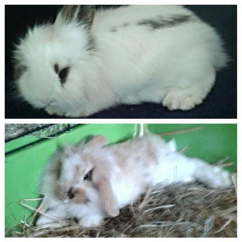 Meine 2 hasen  - (Kaninchen, Hasen, richtig ernähren)