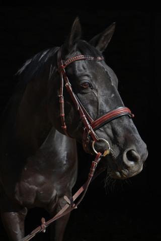 Low Key Aufnahme - (Pferde, Fotografie, schwarzer Hintergrund)