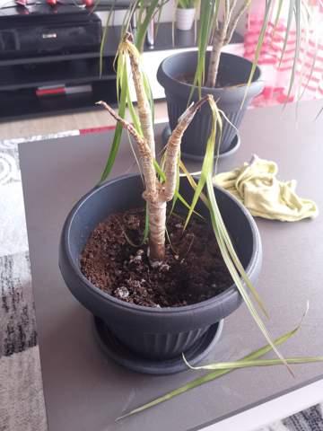 lst die Pflanze noch zu retten?