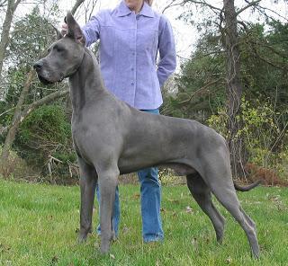 So wird er ausgewachsen aussehen, (als stütze) - (Hund, Namen, lustig)
