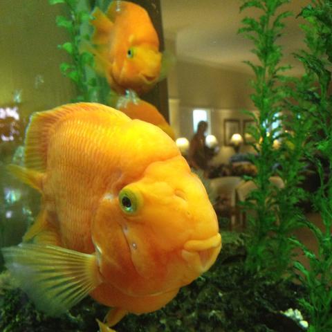 lustiger fisch urlaub fische aquarium. Black Bedroom Furniture Sets. Home Design Ideas