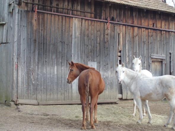 Fressplatz außen... - (Pferde, Futter, Gras)