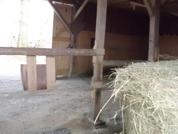 Fressplatz innen (hinter den Balken)... - (Pferde, Futter, Gras)