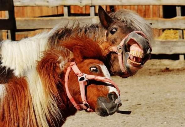 Do you like horses?