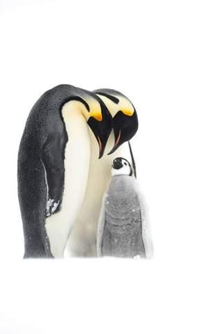 - (Tiere, Abstimmung, Pinguin)