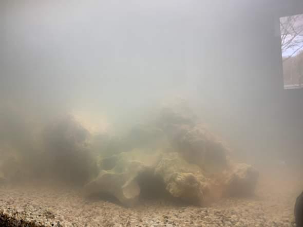 Malawibarsche schnappen nach Luft an der Oberfläche,warum?