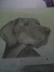 Zufälliges Bild von einem Hund (Im Unterricht aus langeweile gemacht) - (Beruf, Gehalt, zeichnen)