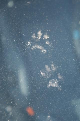 Marder Oder Katze Welche Spuren Sind Das Auf Meinem Auto Tiere