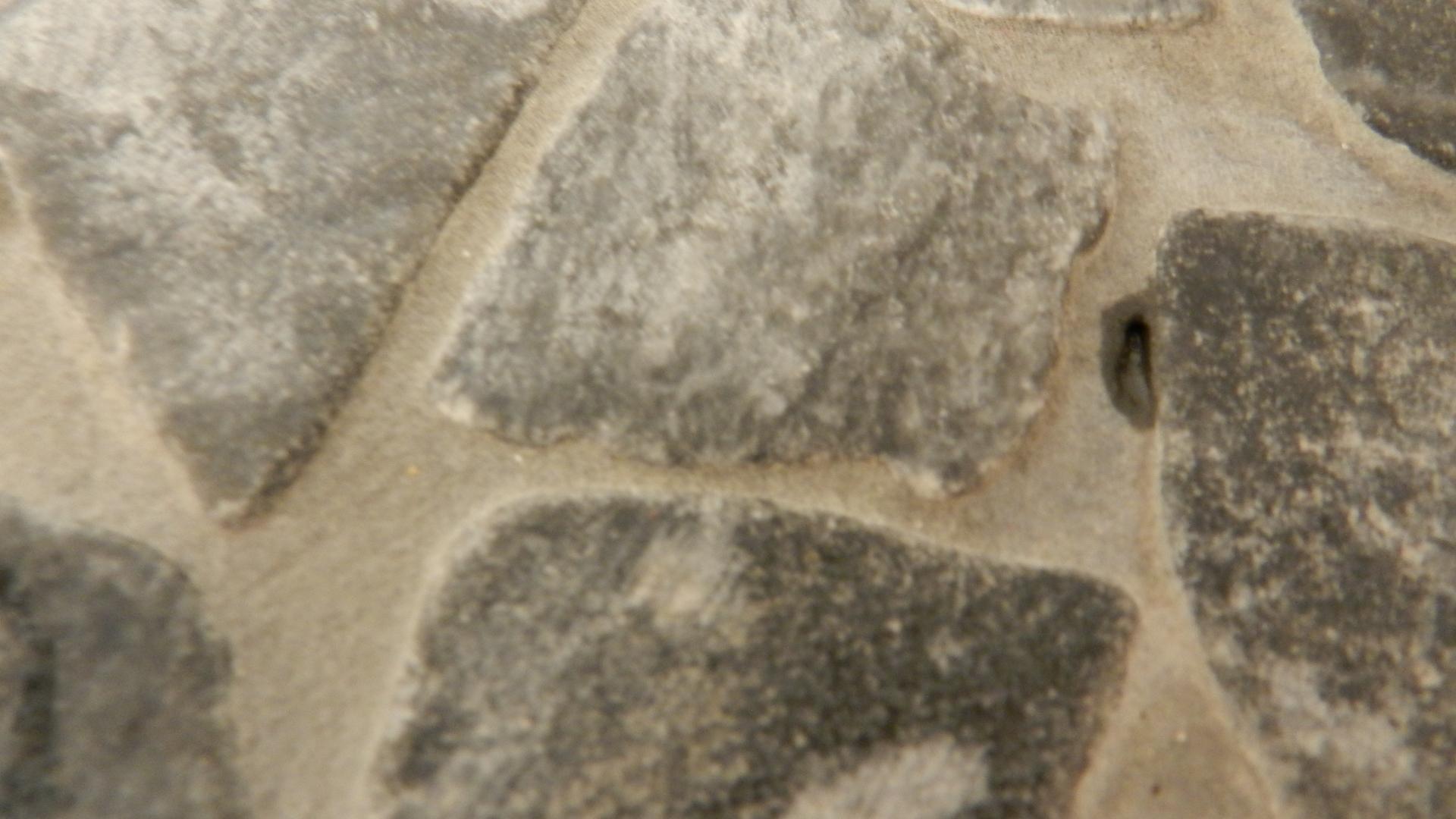Marmorbruch Mosaik In Der Dusche Mit Gereinigt Reparatur Bauen Reinigung.  Stein Mosaik Dusche Mit Mosaik Bordre ...