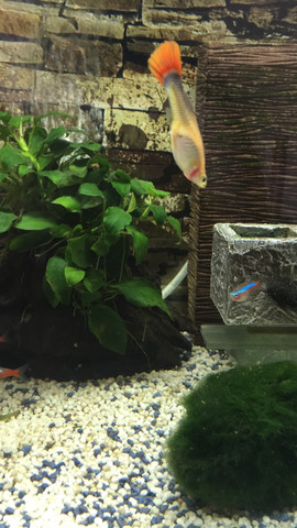 Kopfüber - (Wasser, Fische, Aquarium)