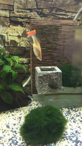 mein guppy schwimmt komisch was bedeutet das wenn mein fisch so schwimmt wasser fische. Black Bedroom Furniture Sets. Home Design Ideas